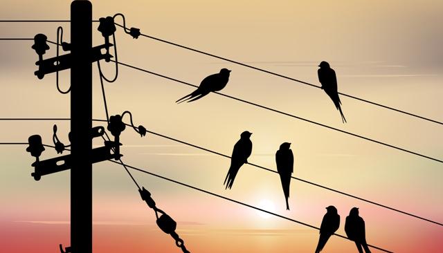 BirdsOnAWire_LinkedInHeader
